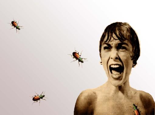 insectos1copia